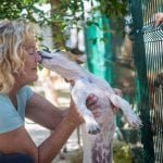 S.O.S. el Arca: The Playa del Carmen Dog Shelter That Helps Us Humans