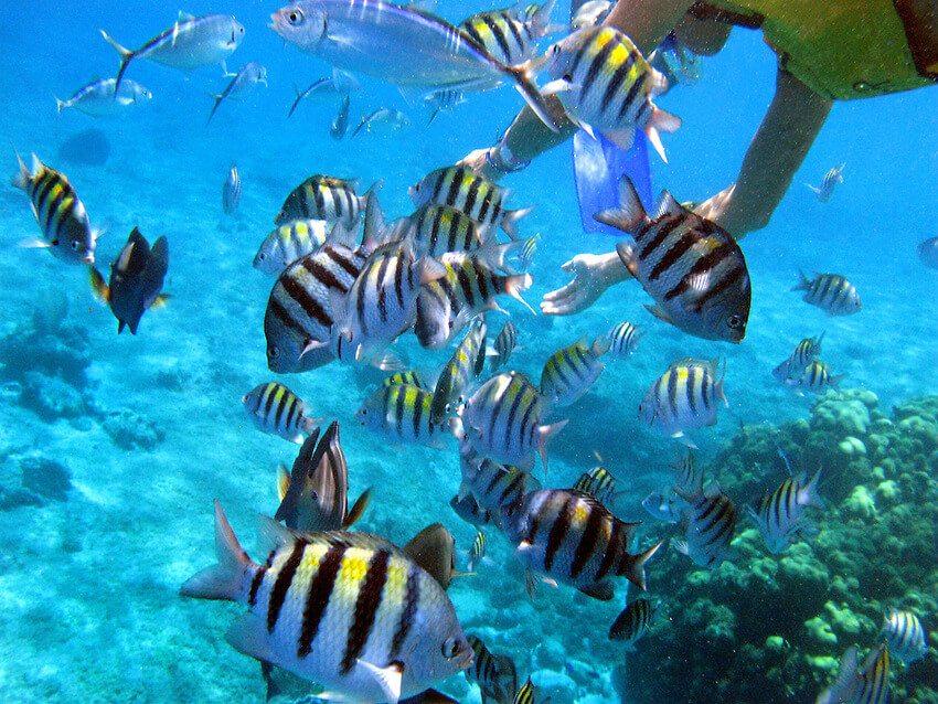 Fish in Cozumel
