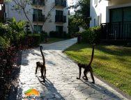 Sandos Caracol monkeys-min