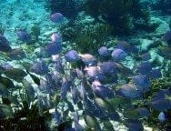Snorkelling Riveiera Maya