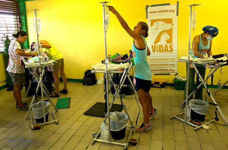 Vets helping animals at ViDAS