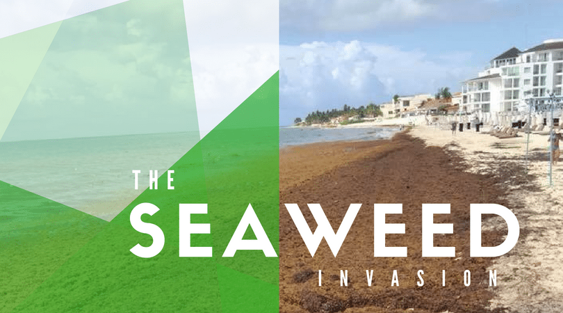 8 Things to Do When There's Seaweed on The Beach in Playa del Carmen
