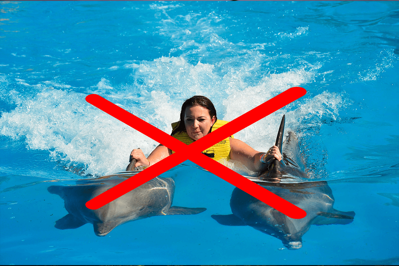 5 FUN Things to Do That Are BETTER than Swimming with Dolphins