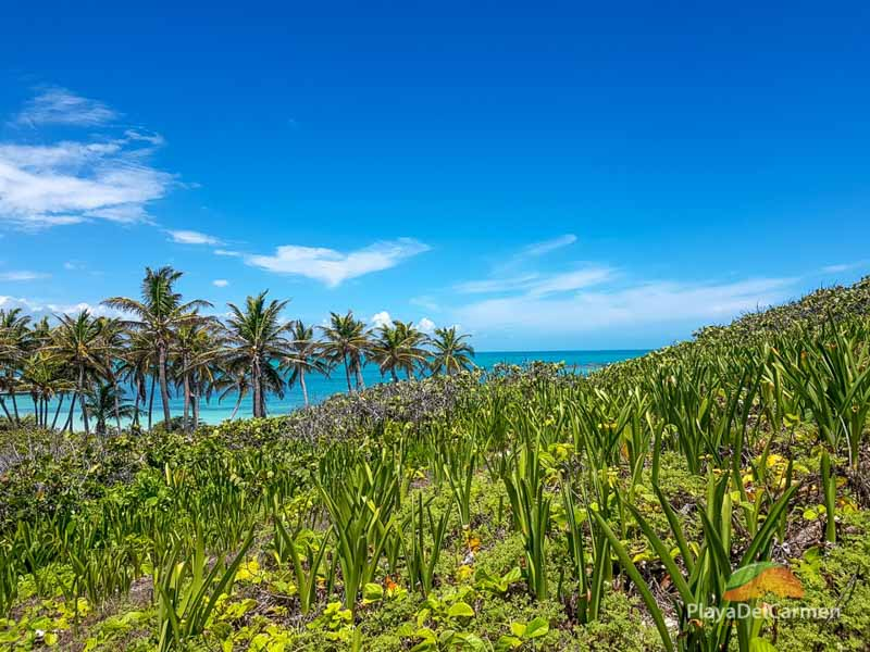 Isla Contoy island tour