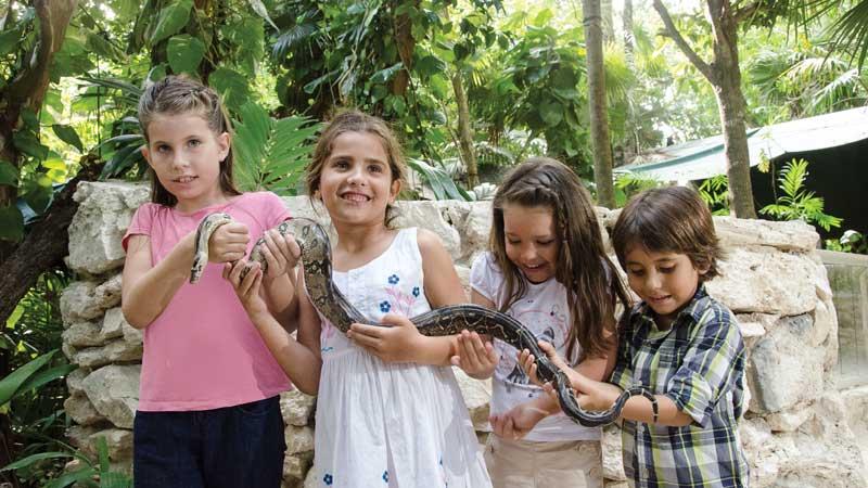 CROCOCUN ZOO kinds with snake