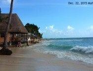 playa del carmen beach seaweed-min