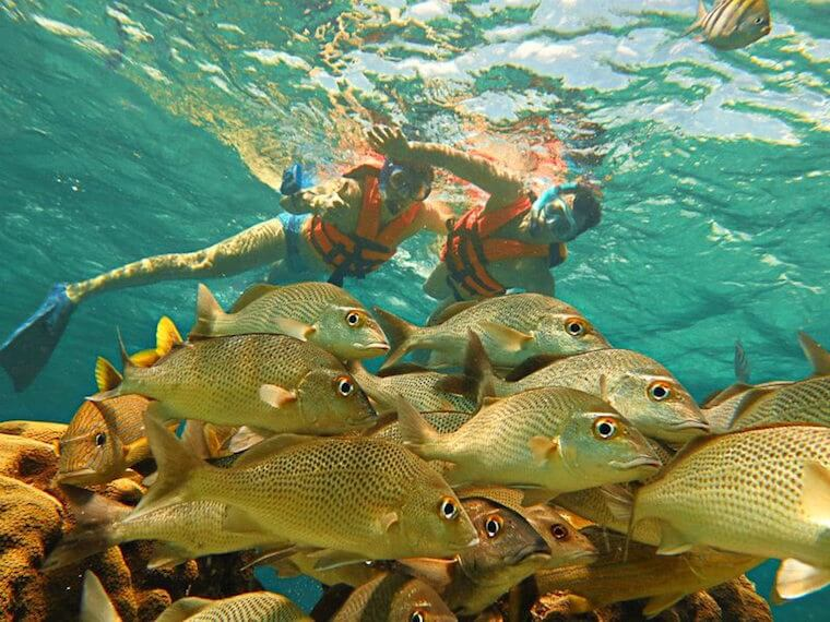 maya snorkeling tour