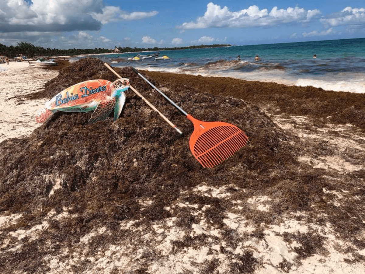 How to Handle a Seaweed Invasion in Playa del Carmen: Activities & Ideas (2020)