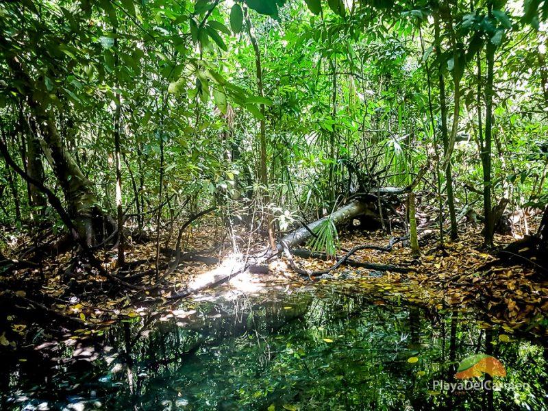 Sian Kaan Biosphere