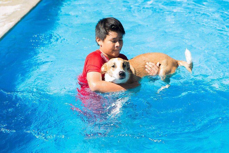 Boy plays with dog in pool at S.O.S. El Arca Playa del Carmen