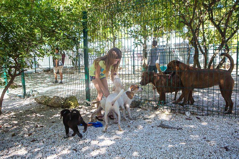 Volunterr at S.O.S. el Arca dog shelter in Playa del Carmen