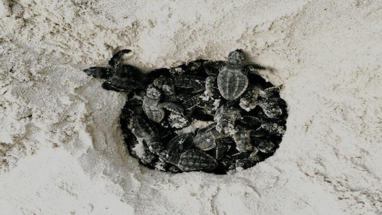 eco tours turtle night watch