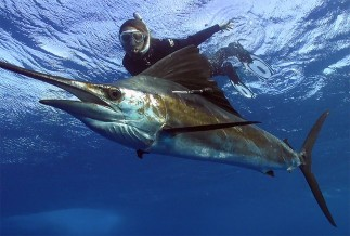 Sailfish Encounter tour Cancun