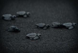 Turtle Night Watch Tour